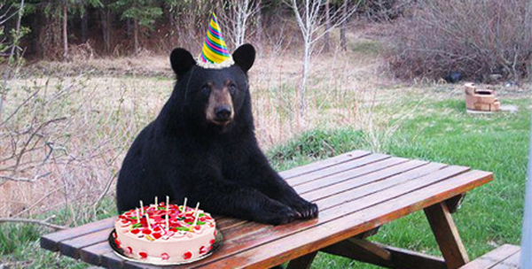 Yayomg Bear Wearing Party Hat